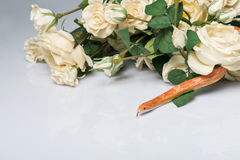 Reptilar på vit bakgrund Royaltyfri Fotografi