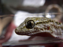 Reptile #01. Close-up photo of a little reptile royalty free stock photo