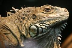 Reptile Image stock