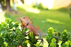 Reptile. Baby Reptile on leaf of flower Royalty Free Stock Photos