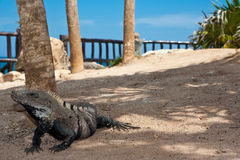 Reptile Image libre de droits