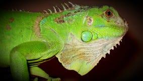 reptile Photo libre de droits