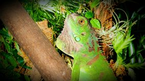 reptile Photographie stock