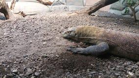 reptile Photos libres de droits