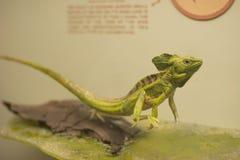 reptile Images libres de droits