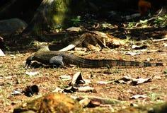 reptile Photos stock