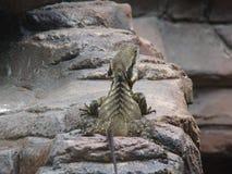 reptile Photo stock