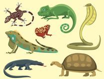 Reptile and amphibian colorful fauna vector illustration reptiloid predator reptiles animals. Stock Photo