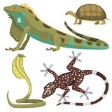 Reptile and amphibian colorful fauna vector illustration reptiloid predator reptiles animals. Royalty Free Stock Image