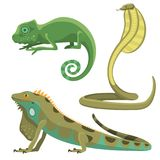 Reptile and amphibian colorful fauna vector illustration reptiloid predator reptiles animals. Stock Photos