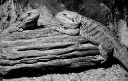 Reptile animal in zoo Stock Photography