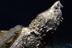 Reptile in aquarium, Moscow, turtle. Big Reptile in aquarium, Moscow, turtle royalty free stock photos