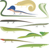 Reptile Cartoon Reptiles types set Royalty Free Stock Images