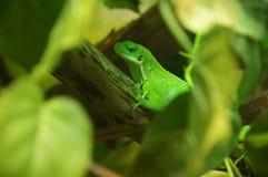 Reptile dans le zoo Photographie stock libre de droits