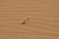 Reptile de désert Images stock