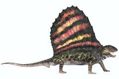Reptile de permien de Dimetrodon illustration libre de droits