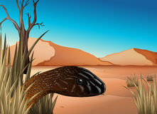A reptile at the desert Royalty Free Stock Images
