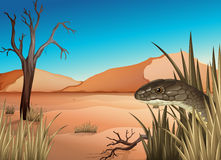 A reptile at the desert. Illustration of a reptile at the desert Stock Images