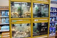Reptile Display tanks in a pet store Stock Photo