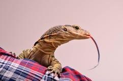 Reptile et son propriétaire Photo stock