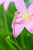Reptile on flower Stock Image