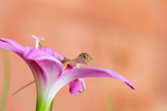 Reptile on flower Royalty Free Stock Images