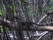 Reptile foncé masqué image libre de droits
