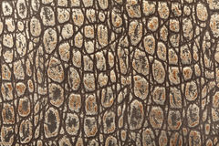 Reptile leather Stock Photography