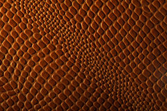 Reptile leather Royalty Free Stock Images