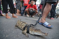 Reptile Lovers in Indonesia Stock Photos