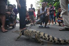 Reptile Lovers in Indonesia Royalty Free Stock Images