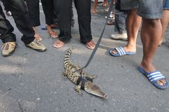 Reptile Lovers in Indonesia Stock Image