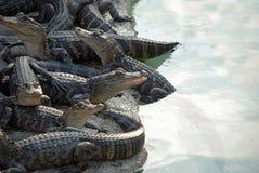 Reptile Pile Stock Photo