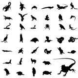 reptile   silhouettes Royalty Free Stock Images