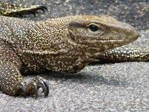 Reptile, Singapore Stock Image