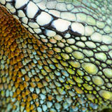 Reptile skin royalty free stock photo