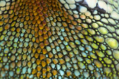 Reptile skin Stock Image
