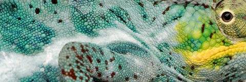 Reptile skin Stock Photo