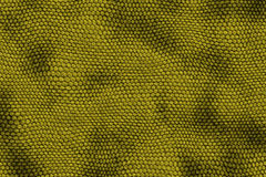 Reptile skin backgound Royalty Free Stock Image