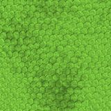 Reptile skin background Stock Images
