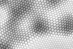Reptile skin. Image of a nice skin background Royalty Free Stock Photo