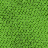 REPTILE SKIN - SEAMLESS. Realistic reptile skin seamless texture Royalty Free Stock Images