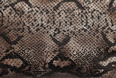 Reptile skin texture Royalty Free Stock Photos