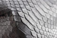 Reptile snake texture closeup, fashion zigzag snakeskin python picture. Reptile snake texture, fashion zigzag snakeskin python picture Royalty Free Stock Photography