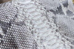 Reptile snake texture closeup, fashion zigzag snakeskin python picture. Reptile snake texture, fashion zigzag snakeskin python picture Royalty Free Stock Image