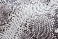 Reptile snake texture closeup, fashion zigzag snakeskin python picture. Reptile snake texture, fashion zigzag snakeskin python picture Stock Images