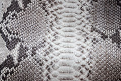 Reptile snake texture closeup, fashion zigzag snakeskin python picture. Reptile snake texture, fashion zigzag snakeskin python picture Royalty Free Stock Images