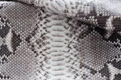 Reptile snake texture closeup, fashion zigzag snakeskin python picture. Reptile snake texture, fashion zigzag snakeskin python picture Stock Photo