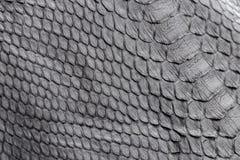 Reptile snake texture closeup, fashion zigzag snakeskin python picture. Stock Image