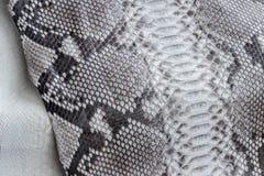 Reptile snake texture closeup, fashion zigzag snakeskin python picture. Stock Photo